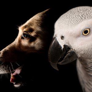 Tierfotograf_Haustiere_05